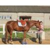 Седло Гран При купить в интернет магазине конной амуниции